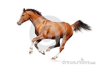 лошадь gallop