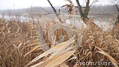 лужок Польша сухой травы Влажная осень сток-видео