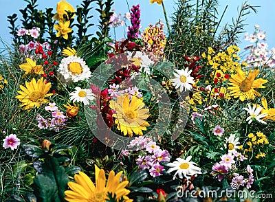 лужок цветков полный