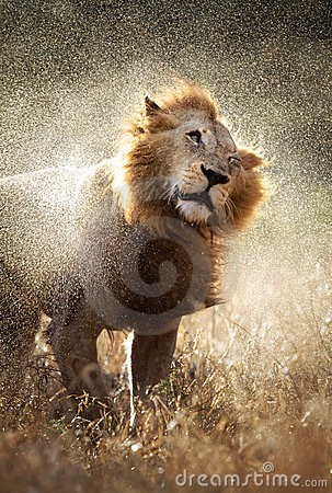 львев с трястить воду
