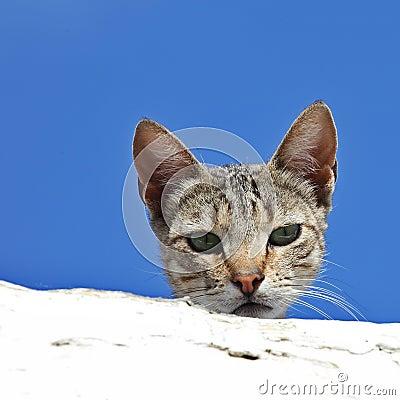 Любознательний кот