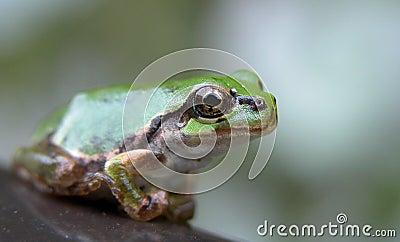 лягушка глаза