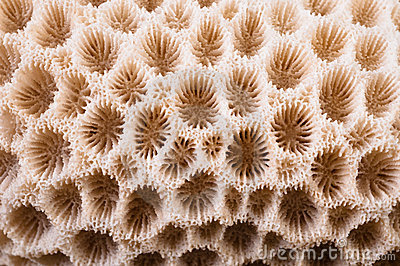 макрос коралла