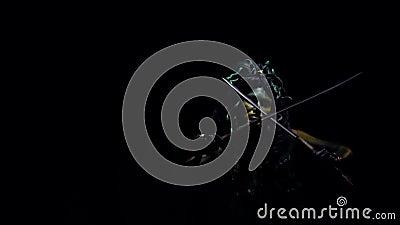 Медуза Gorgon отбрасывая ее шпаги, черную предпосылку видеоматериал