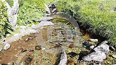 Меньший поток пропуская в идилличной uncontaminated окружающей среде пересекая зеленые луга на итальянских Альпах в лете акции видеоматериалы