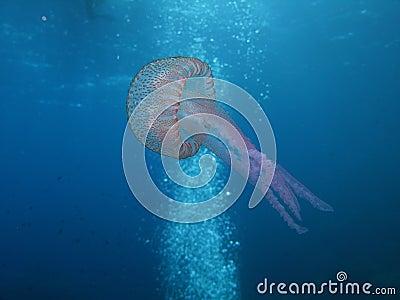 медузы u09
