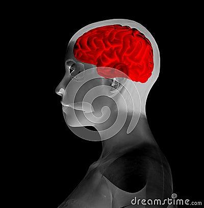 мозг мой