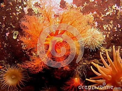 море огурца