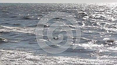 Море одичалые и пакостные 5 сток-видео