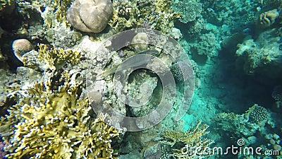 Морская флора и фауна видеоматериал