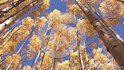 Наклон и укладка в форме деревьев осени акции видеоматериалы