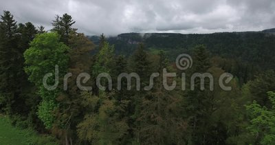 Над деревьями на Biaufond видеоматериал