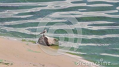 Небольшая птица стоит на камне на банке цветя Green River акции видеоматериалы