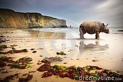 носорог пляжа