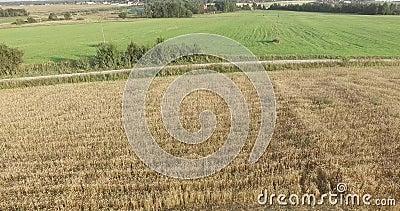 Область Москвы, Россия Пшеничные поля на верхней части акции видеоматериалы