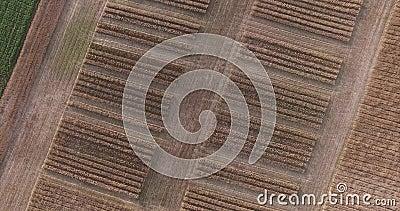 Область Москвы, Россия Пшеничные поля на верхней части сток-видео