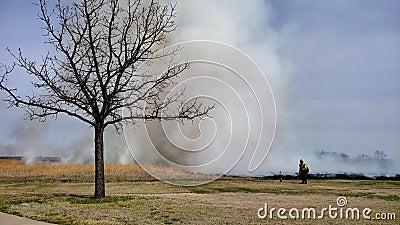 Огонь травы предписал ожог для восстановления прерии с пожарным и деревом в переднем плане видеоматериал