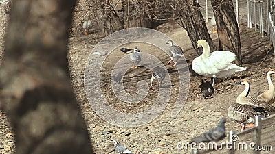 Одичалые птицы в парке птиц видеоматериал