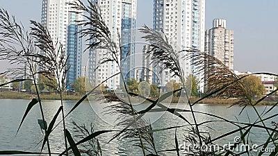 Озеро на фоне городского горизонта видеоматериал