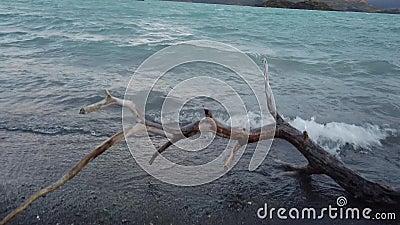 Озеро Норденскьольд в Чили, Патагония Вид на горы Серро-Пэйн-Гранде и Торрес-дель-Пайне акции видеоматериалы
