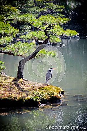озеро kinkakuji