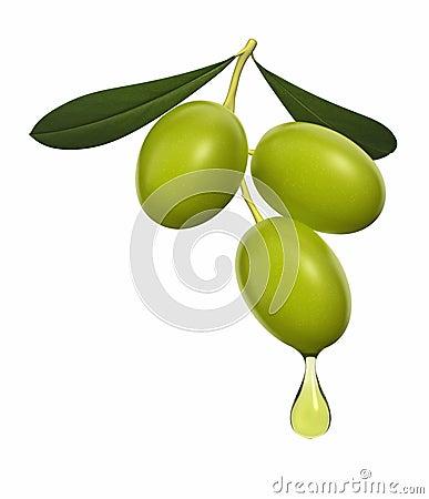 оливка ветви