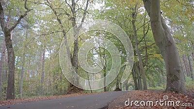 Опрокидывающ съемку которая начинает на уровне дороги, бульвара окруженного красивыми зелеными и желтыми деревьями видеоматериал