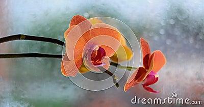 Оранжевые орхидея и дождь вне окна видеоматериал