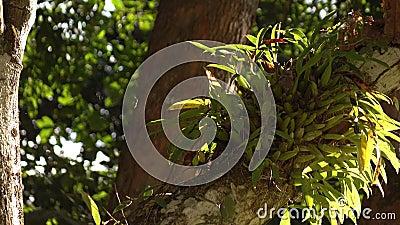 Орхидея на дереве ветви видеоматериал