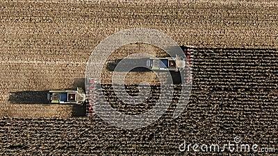 осеннее поле и процесс сбора урожая Два комбайна Увеличение дохода, успешный сезон для экономики, деньги сток-видео