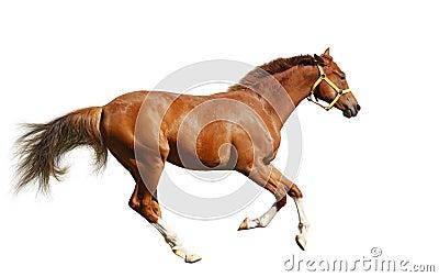 осленок gallops щавель
