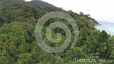 Остров & лес сток-видео