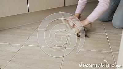 Очистка пола с милым котом с бурманской породой, который в женских руках скользит по домашнему полу, чистящая пыль сток-видео