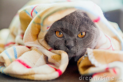 одеяло вниз