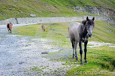 Одичалые лошади