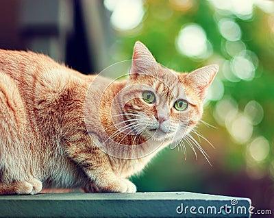 Одичалый кот
