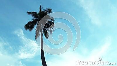 пальма кокоса с предпосылкой голубого неба и зоной космоса экземпляра, петлей видеоматериал