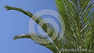 Пальм-Дерево 4 Кбайт на дереве Пляж-Кокос-Квата оставляет прекрасный тропический вид на лето сток-видео