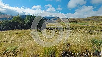 Панорама злаковика в исландской сельской местности на береге изумительного озера в солнечной погоде сток-видео