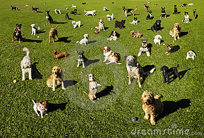 парк собак