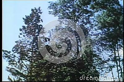 Падать дерева взгляда низкого угла видеоматериал