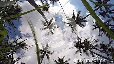 Пальмы кокоса рая на голубом небе на роскоши сток-видео