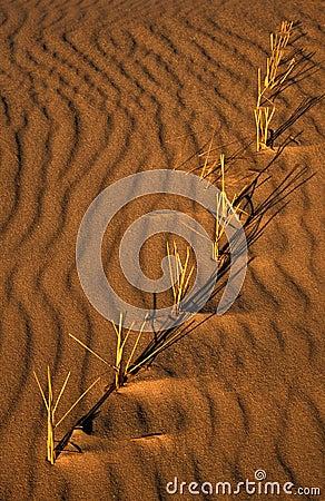 песок травы