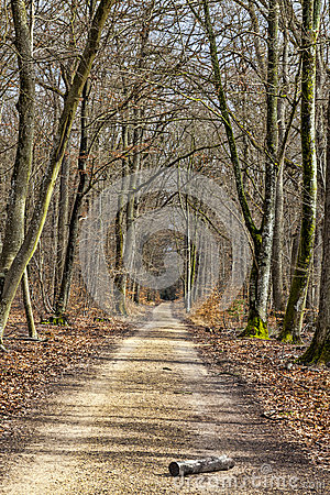Пешеходная дорожка в лесе