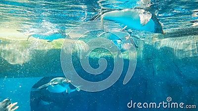 пингвины плавали свободно видеоматериал