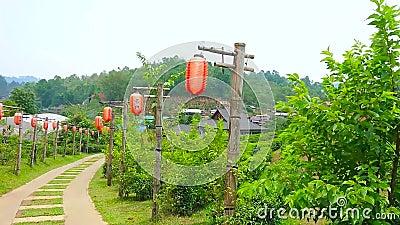 Плантация чая деревни Юньнань китайской тайца Rak запрета, Таиланда акции видеоматериалы