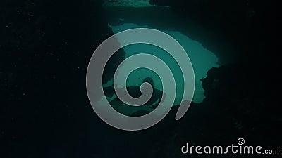 Пловчик с флипперсами, проходящий через пещеру акции видеоматериалы