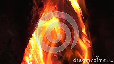 Пожар горит леса горят сток-видео