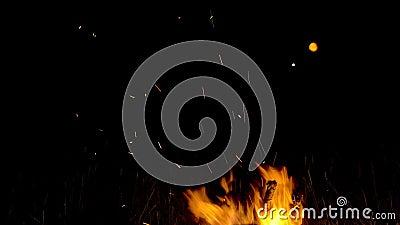 Полнолуние и костры горя яркими в ноче сток-видео