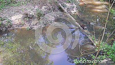 Поток воды в глубоких древесинах акции видеоматериалы
